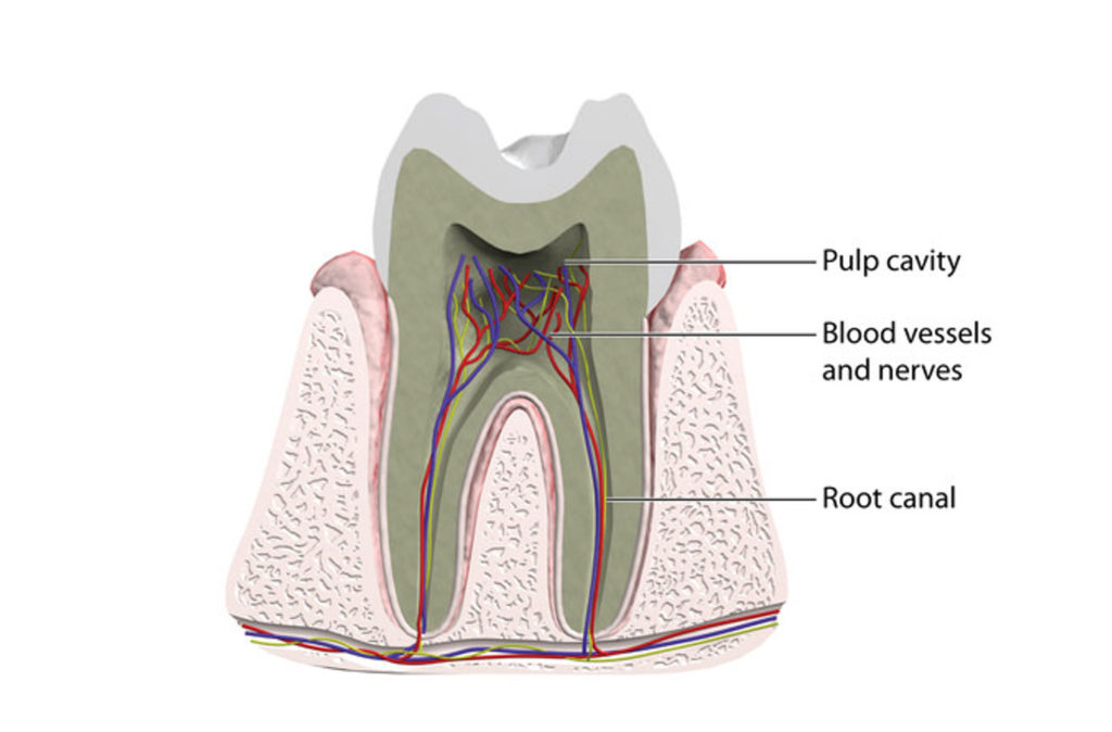 Root Canal information